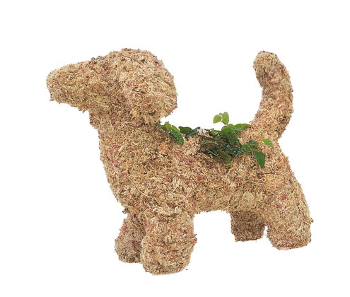 Dachshund Topiary - Planted