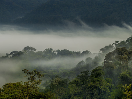Rwanda: nieuwe bestemming Mgeni Safaris