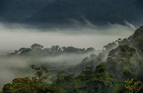 Mgeni Safaris_gorillas in the mist Rwand