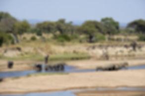 Mgeni Safaris_Sand Rivers Selous Game Re