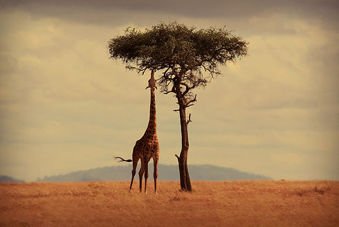 Mgeni Safaris - huisstijl Mgeni Safaris