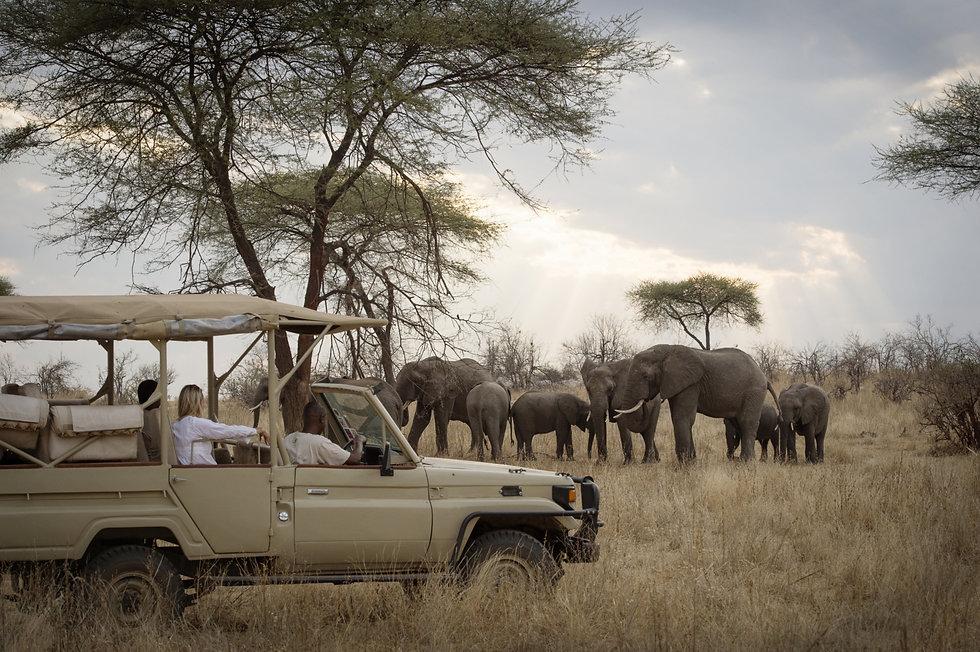 Mgeni_Safaris_kudde_olifanten_Ruaha_priv