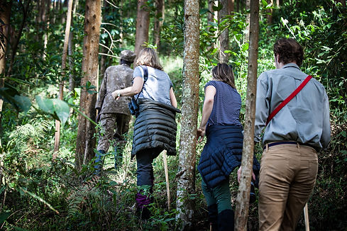 Mgeni Safaris_Gorillatracking Bwindi TUS