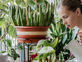 Watering your houseplants: What's the right amount?
