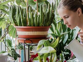 Cuidar das plantas pode ser tão benéfico quanto praticar esportes