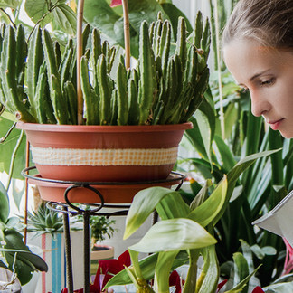 Watering Your Houseplants: It's Not as Hard as You Think!