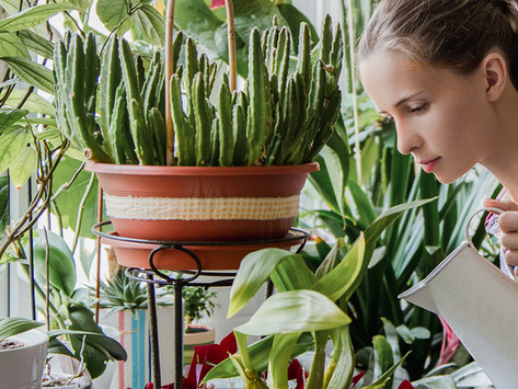 5 Ways to Garden Mindfully & Find your Inner Peace