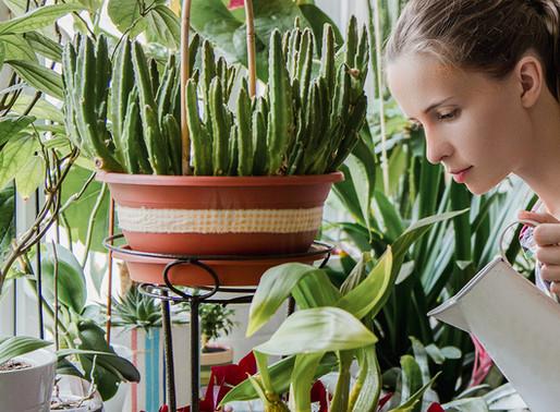 5 techniques de jardinage avec du film alimentaire