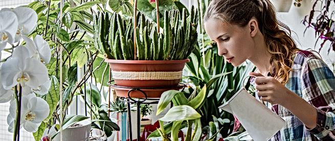 Bewässerung Indoor Garden