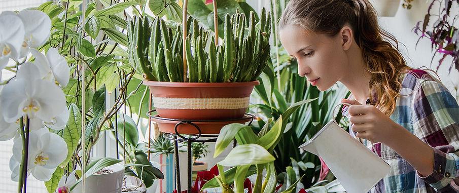 Watering Indoor Garden
