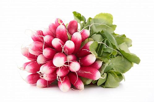 Radis rose ou rouge  (botte)