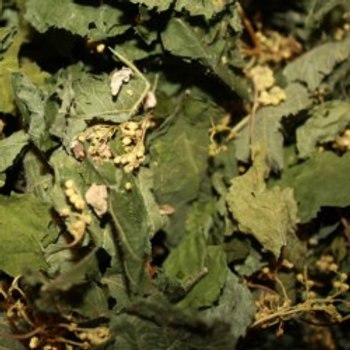 Tisane MUSCLE ET ARTICULATION