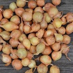 Oignons jaunes (1kg)