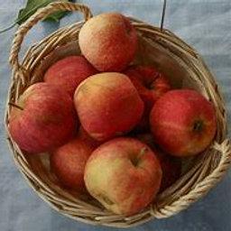 Pommes  GALA de Jagny  kg