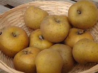Pommes  CANADA de Jagny  kg