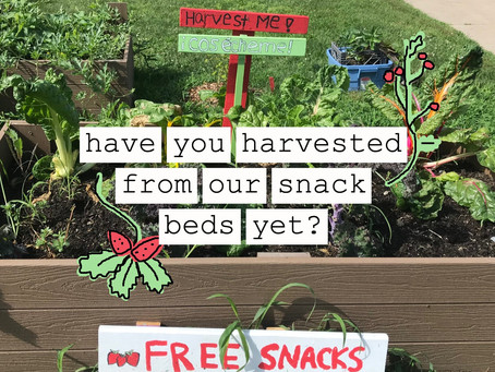 Edible New London Snack Beds