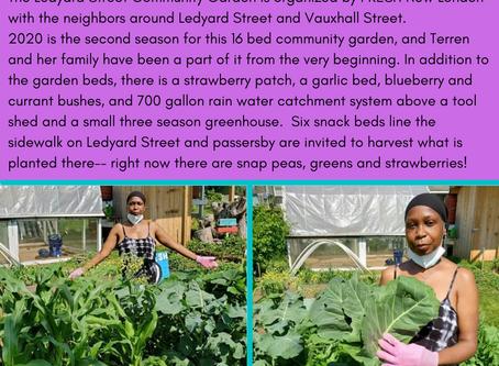 Community Gardeners!
