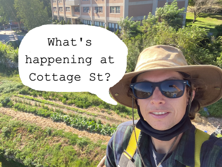 What's Happening at Cottage St?
