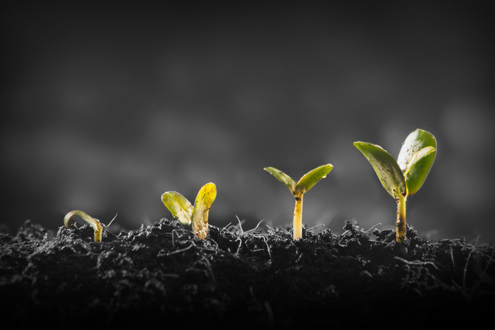 Young-plant-growing-884292786_3888x2592.