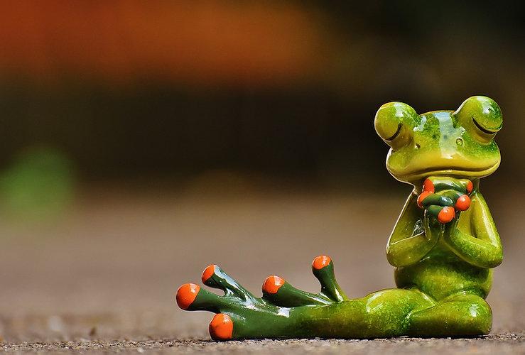 frog-1672866_1280.jpg