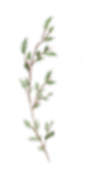 forestbranch1.png