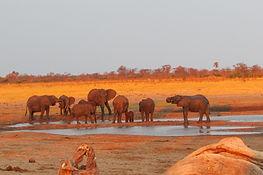 Golf and Safari Vacation