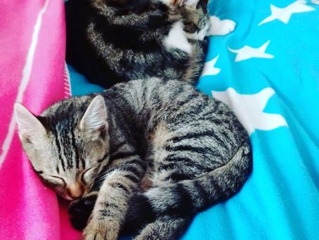 Nach Spieleinheit mit Katze - alle zufrieden