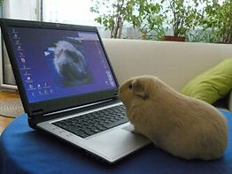 webinare_Meerschweinchenfarm.jpg