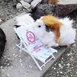 Emely bereitet sich den Liegestuhl vor