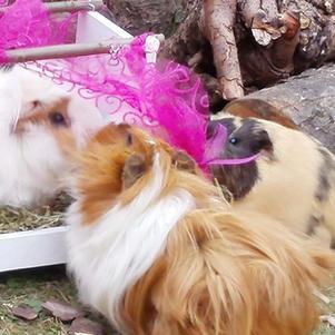 Quietschi und Sophie frisch verliebt