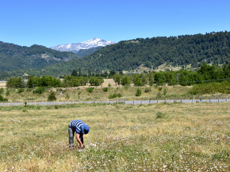 The key to plant invasions in the Andes