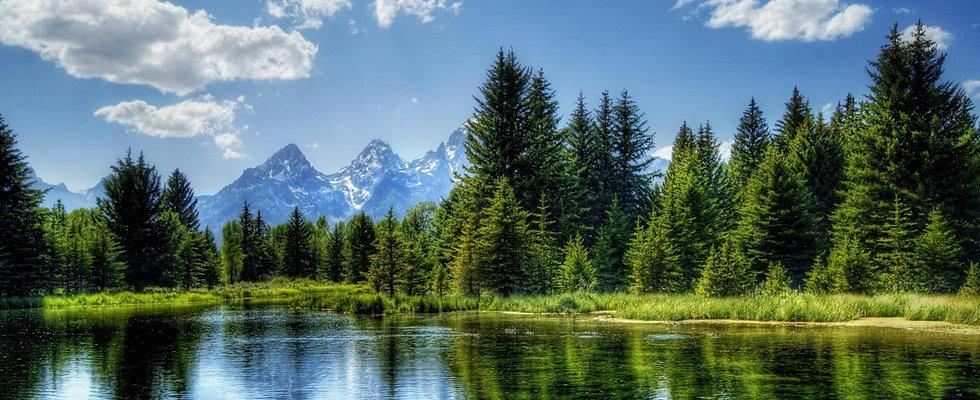 landscape forest.jpg