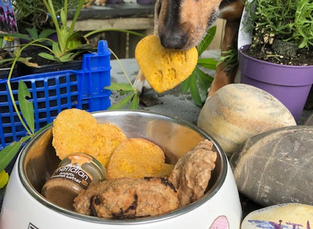 Dog Blog 2 - Superfoods for dogs