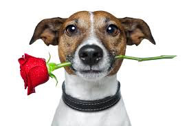 Top 10 ways to show your furry valentine how much you care!