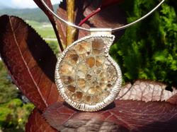 Argent - Ammonite