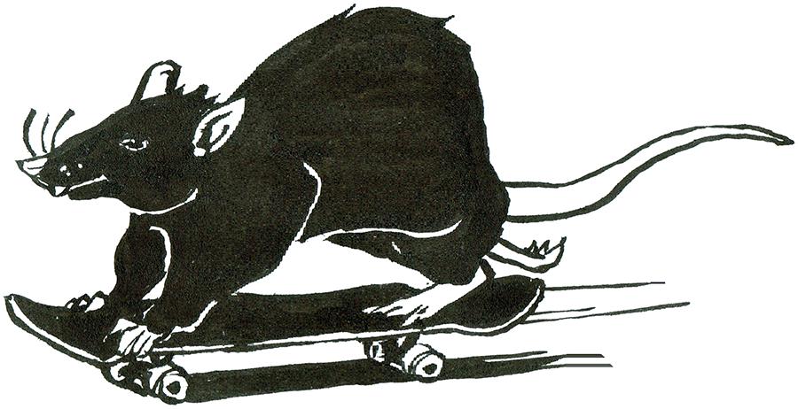 Rat Day 10