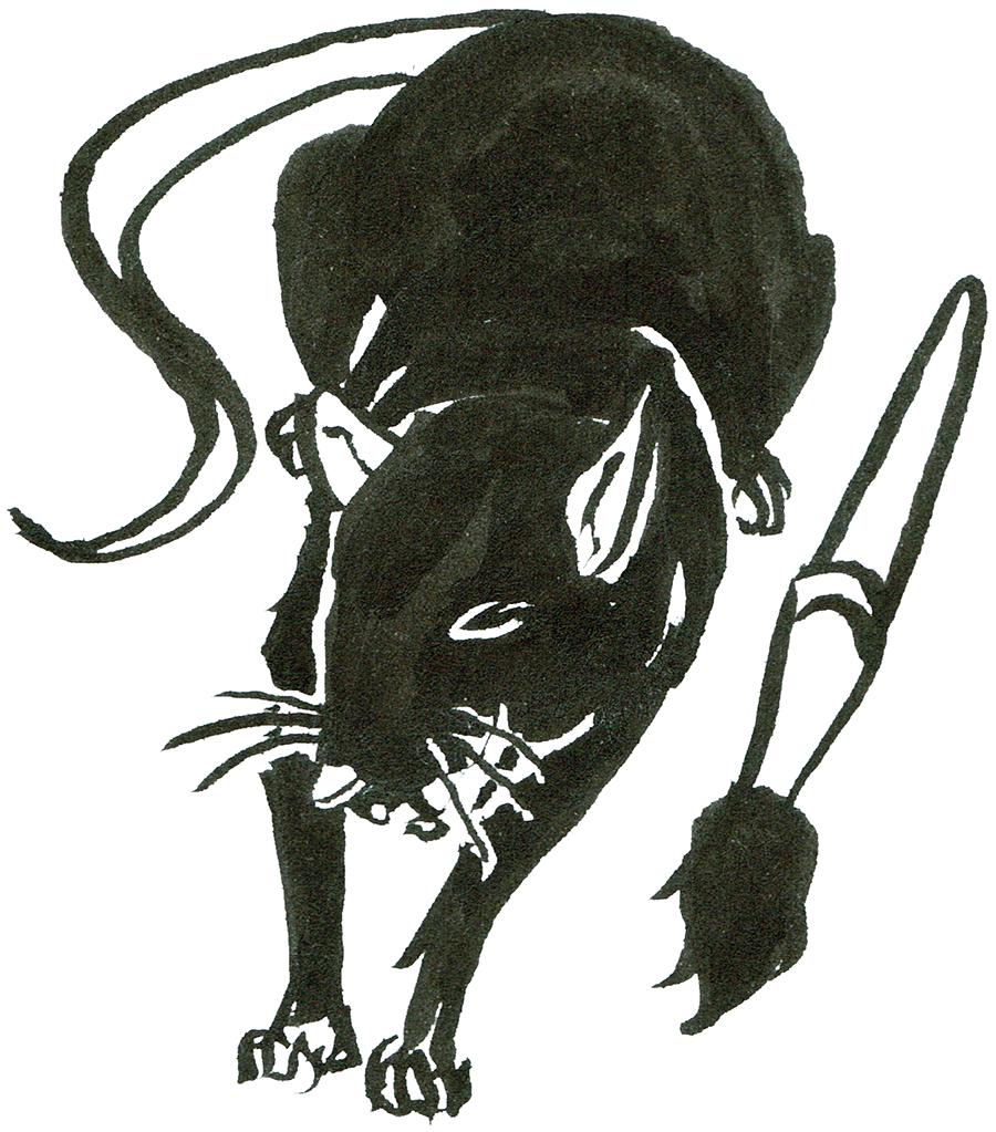 Rat Day 27