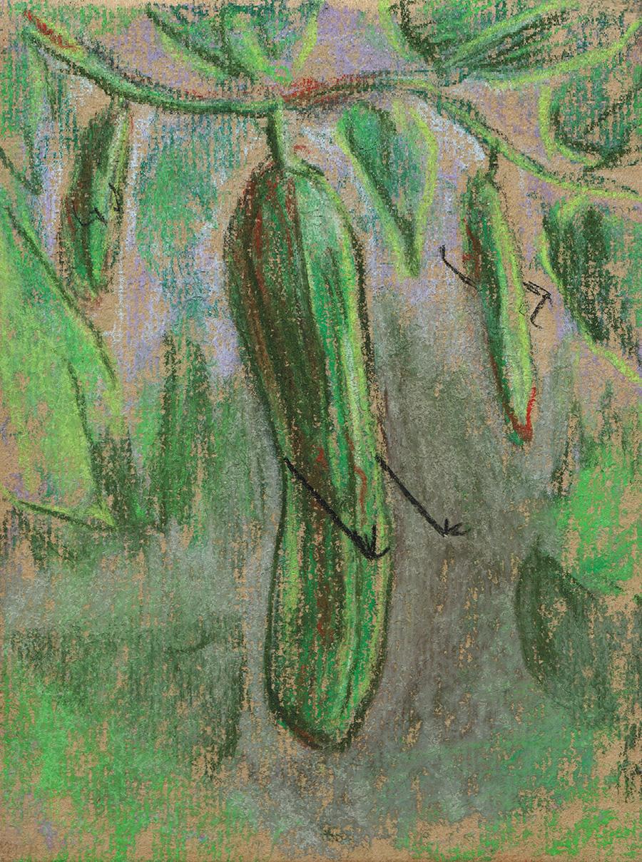04 Cucumber