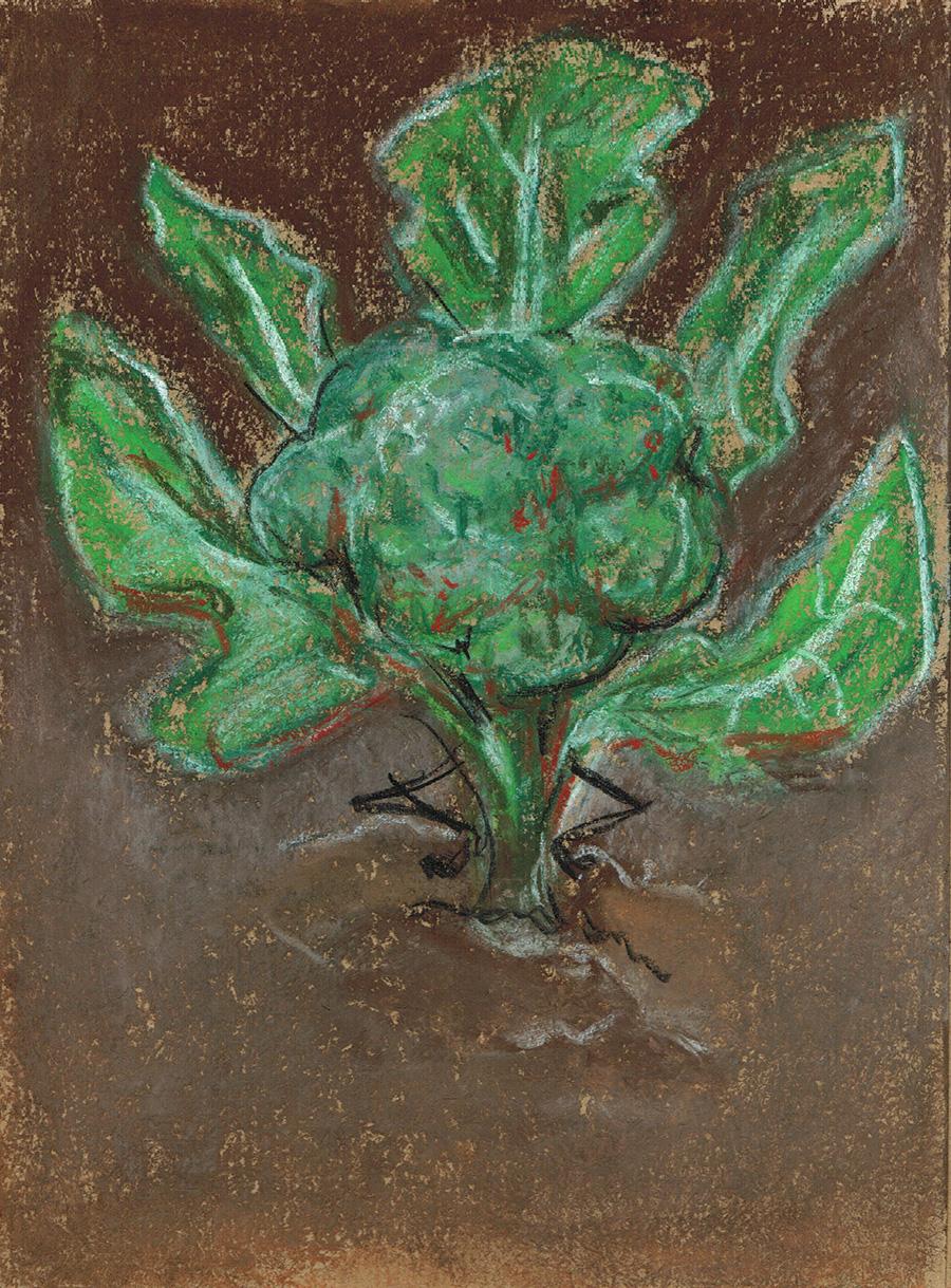 02 Broccoli