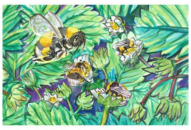 Pollinating Bumbles