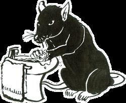 Rat Day 7