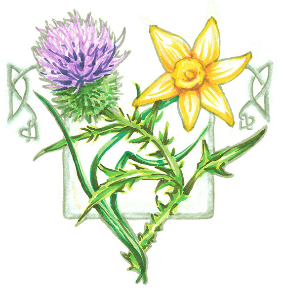 Thistle and Daffodil design