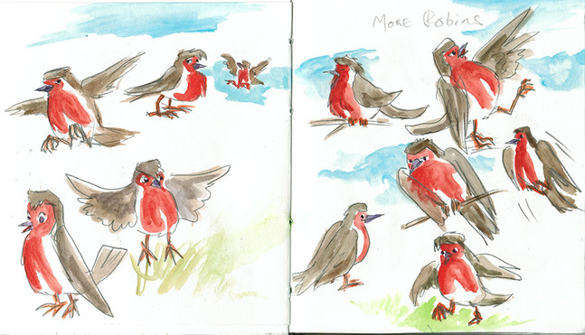 Other Robins