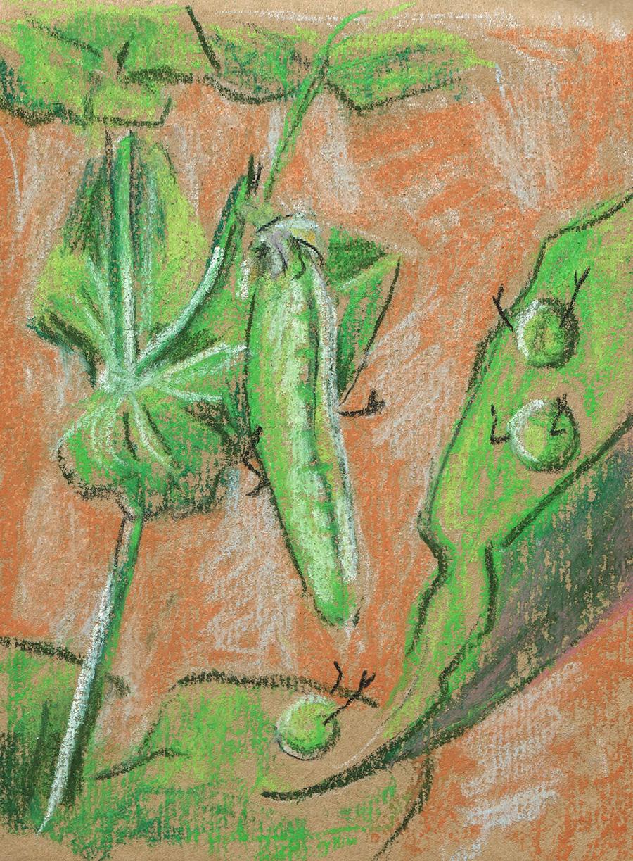 05 GardenPea