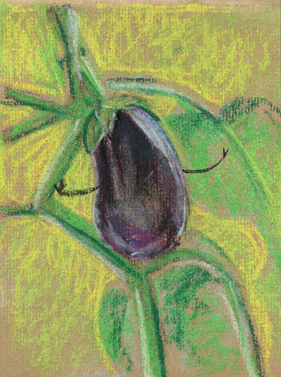 06 Aubergine