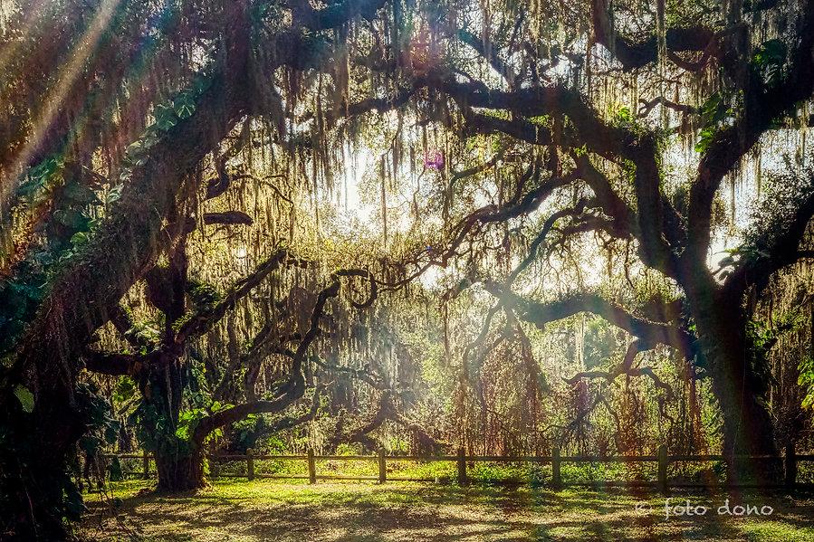 Tree Dancers - B2072294.jpg