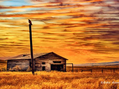 Abandoned Homesteads