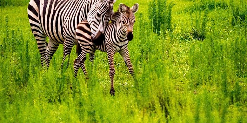 Foto Wilderness Safari