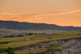 Sunset Among the Grasslands