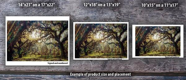 Tree Dancer Example.jpg